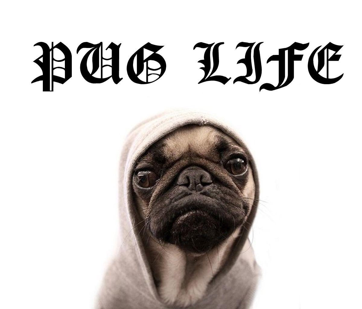 Pin By April Pug On Animagic Cute Pugs Pug Memes Pugs
