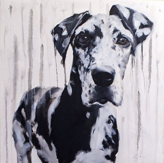 Large Black And White Harlequin Great Dane By Clairhartmannfineart
