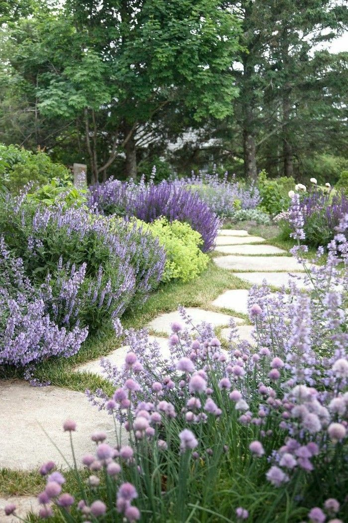 Photo of Rock garden plants – our 6 favorites make the rocky landscape colorful rock garden plants the garden path with beautify plants