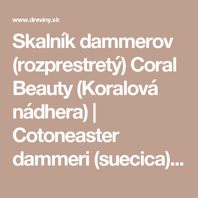 Skalník dammerov (rozprestretý) Coral Beauty (Koralová nádhera) | Cotoneaster dammeri (suecica) Coral Beauty - Záhradníctvo ABIES