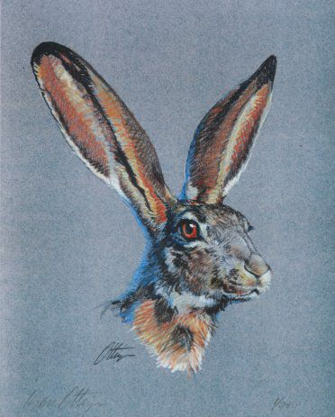 Jack Rabbit Colored Pencil Print  Things I love  Pinterest