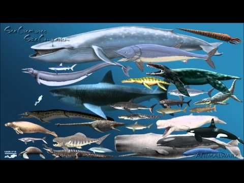 Megalodon vs Liopleurodon - Bing Images | Loreli\'s stuf | Pinterest