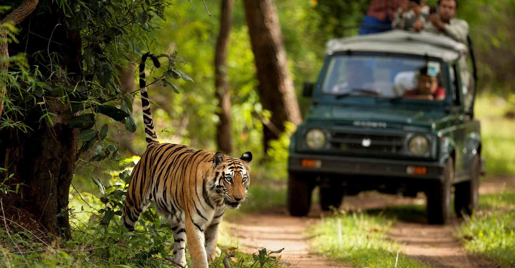 Get Online Jeep Safari Booking At Jim Corbett National Park
