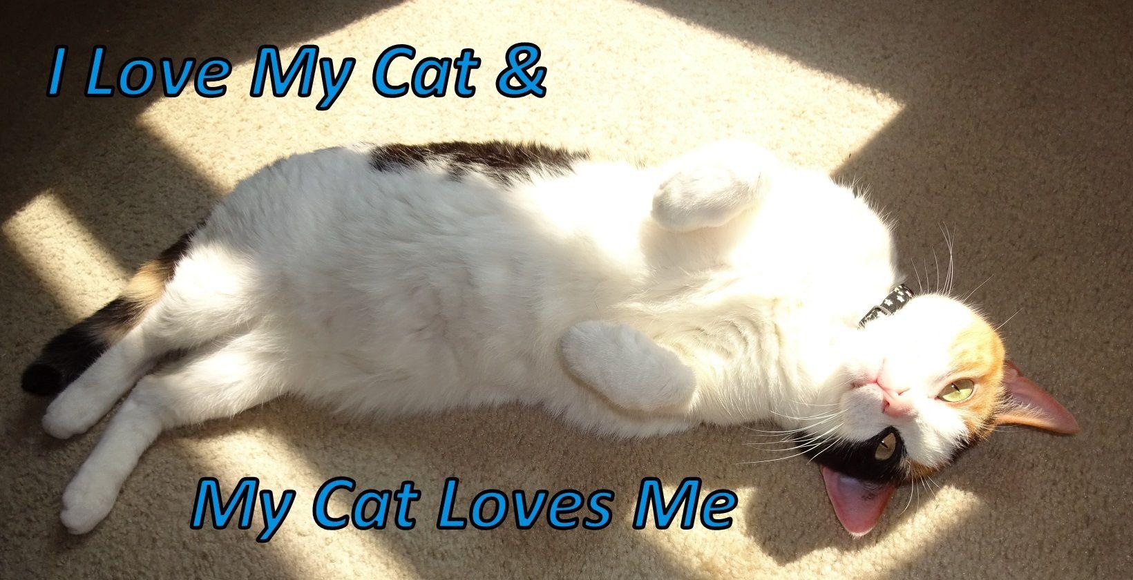 Google themes meme -  I Love My Cat My Cat Loves Me My Sweet Girl Bonney