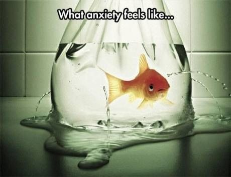 Accurate. I can feel myself starting to panic just looking at that fish and putting myself in its place...