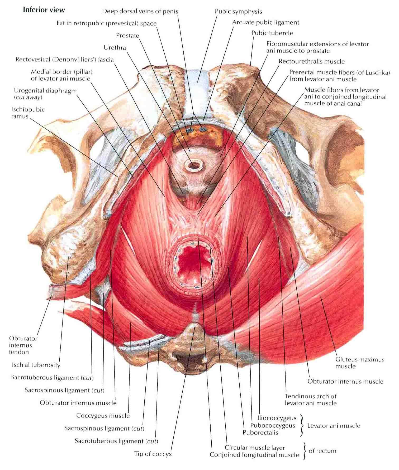 Giz Images: Pancreatitis, post 15 | pain management | Pinterest ...
