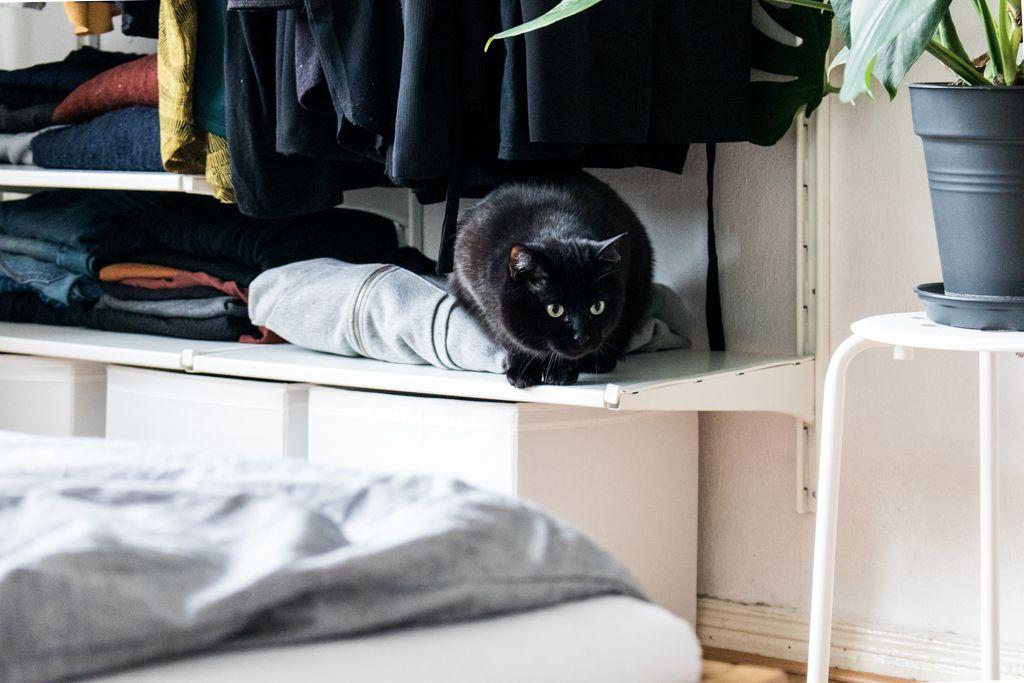 Katzenbesitzer und ihr Zuhause: Homestory mit Thewaveshavecome ...