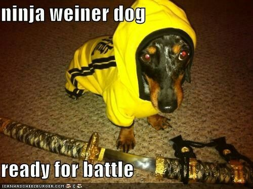 Pin By Debra Hardin On Dachshund Funny Quotes Meme Puppy Dog Pictures Dog Pictures Dogs