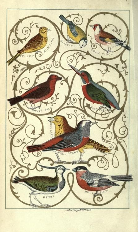 John Leonard Knapp, Country rambles in England; or, journal of a naturalist (1853)