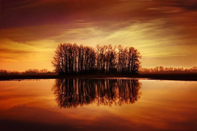 Designpics Silhouetted Trees Reflected on Water by Don Hammond Photographic Print on Canvas