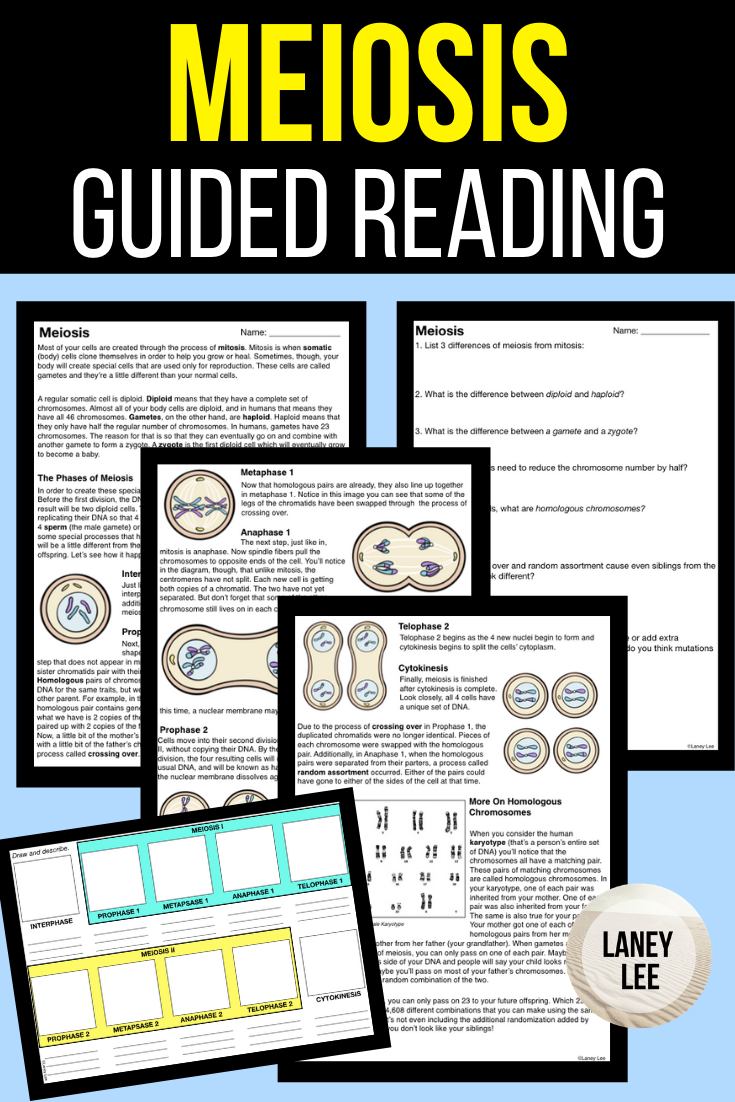 Meiosis Guided Reading + Worksheets Meiosis, Guided