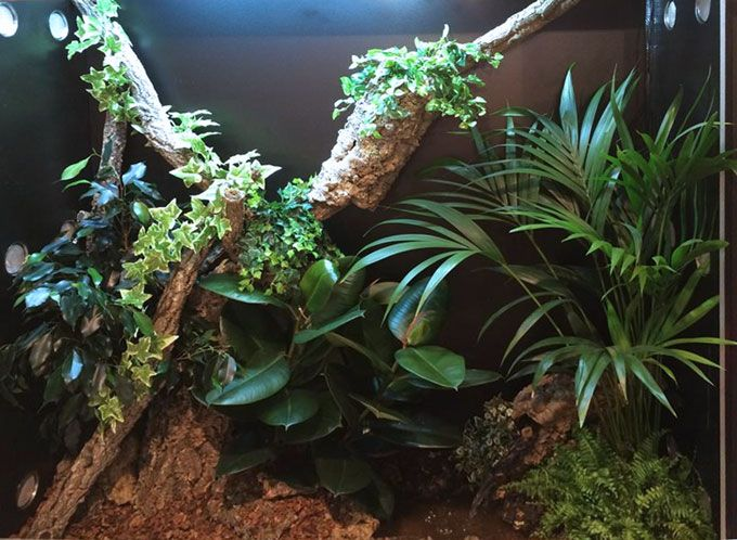 Arcadia Reptile's live display at Interzoo in Germany, 2014. Illuminated using a 39W High Output T5 Slimline Luminaire, D3+ UV FLOOD, and Jungle Dawn LED. #vivarium