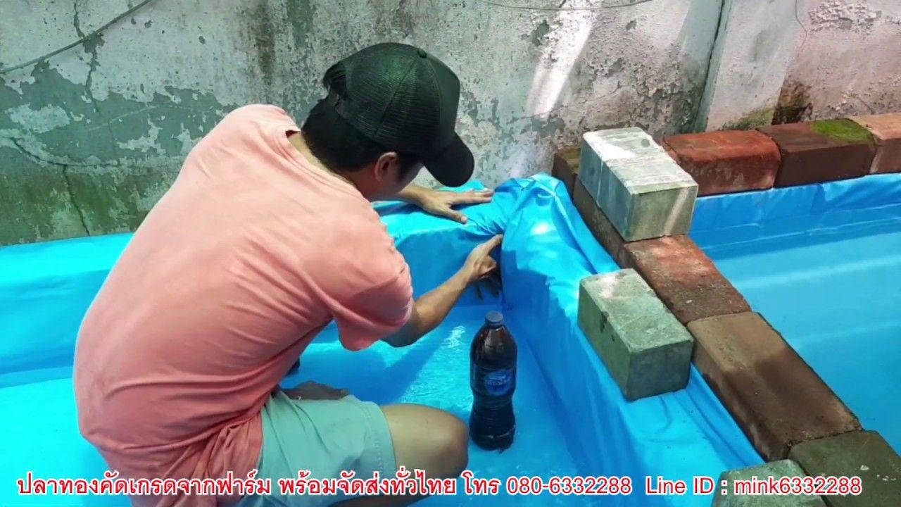 ว ธ การป ผ าใบ บ ออ ฐประสาน บ านปลาทอง อ างศ ลา Youtube กบ ก ง