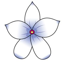 Cartoon Jasmine Flower Drawing Hawaiian Flower Drawing Flower Drawing Flower Sketches