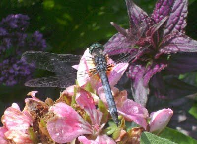 Wildflowers and Dragonflies
