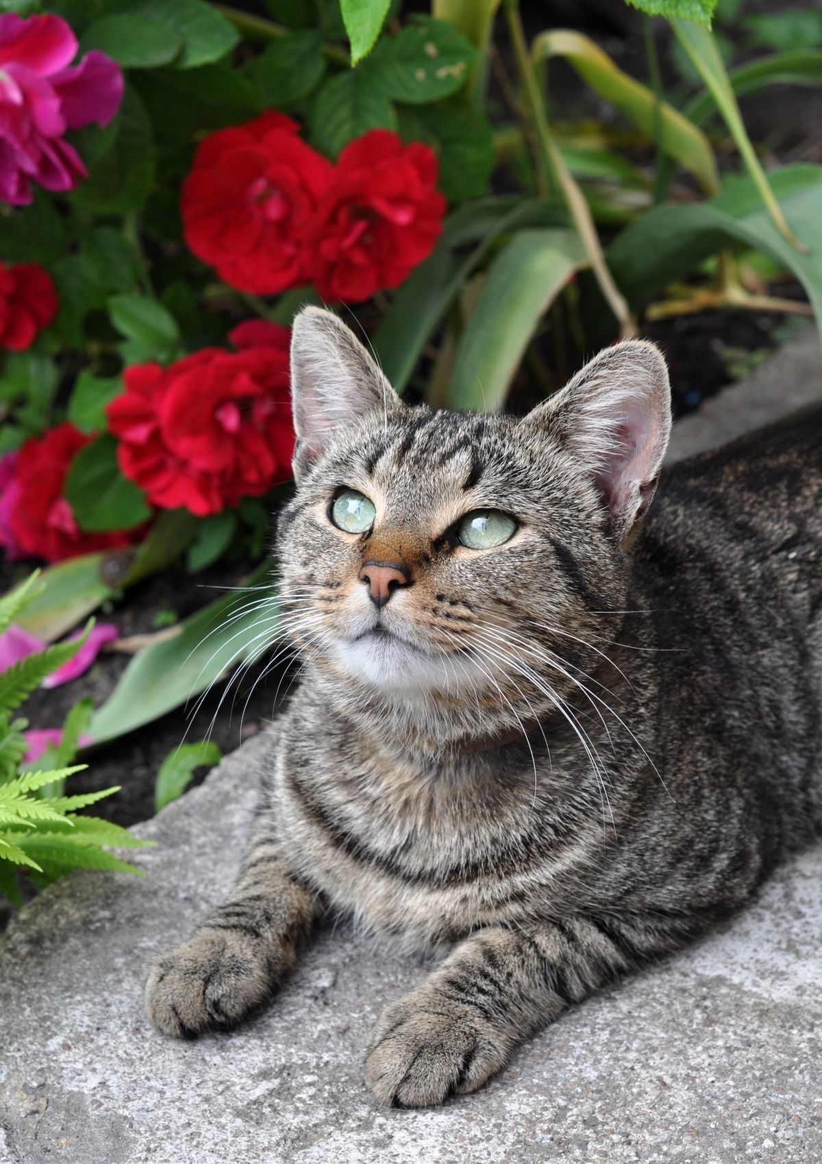 Pin By Anne Gomila On Cats Cat Illnesses Pets Cats