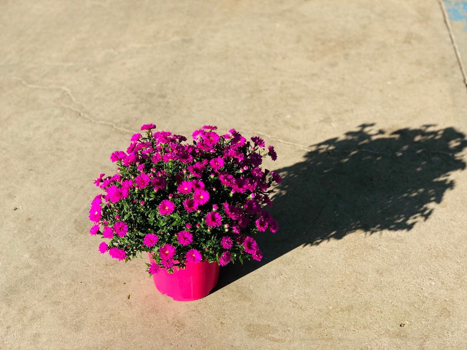 Un nostro follower ci ha scritto che la natura parla con l'anima... ne siamo assolutamente certi... . 🇬🇧 One of our followers wrote us that nature speaks to the soul ... we are absolutely certain ... . #nature #purpleflowers #iloveflowers #beautifulflowers #best_beauty_flora_ #floweraddict #flowershot #flowermagic #flowersofinstagram #instagardenlovers #instaflower #myflowers #mygarden #macroflower #asterflower #flowersoftheworld #flowerperfection ##aster #gagliolofactory #albenga #italy