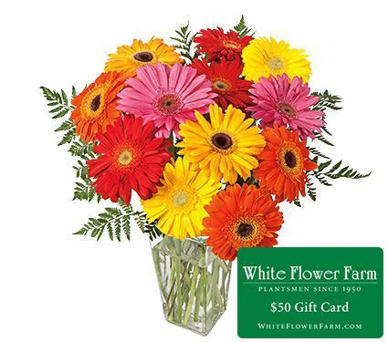 Garden specials flower coupon white flower farm container garden specials flower coupon white flower farm mightylinksfo