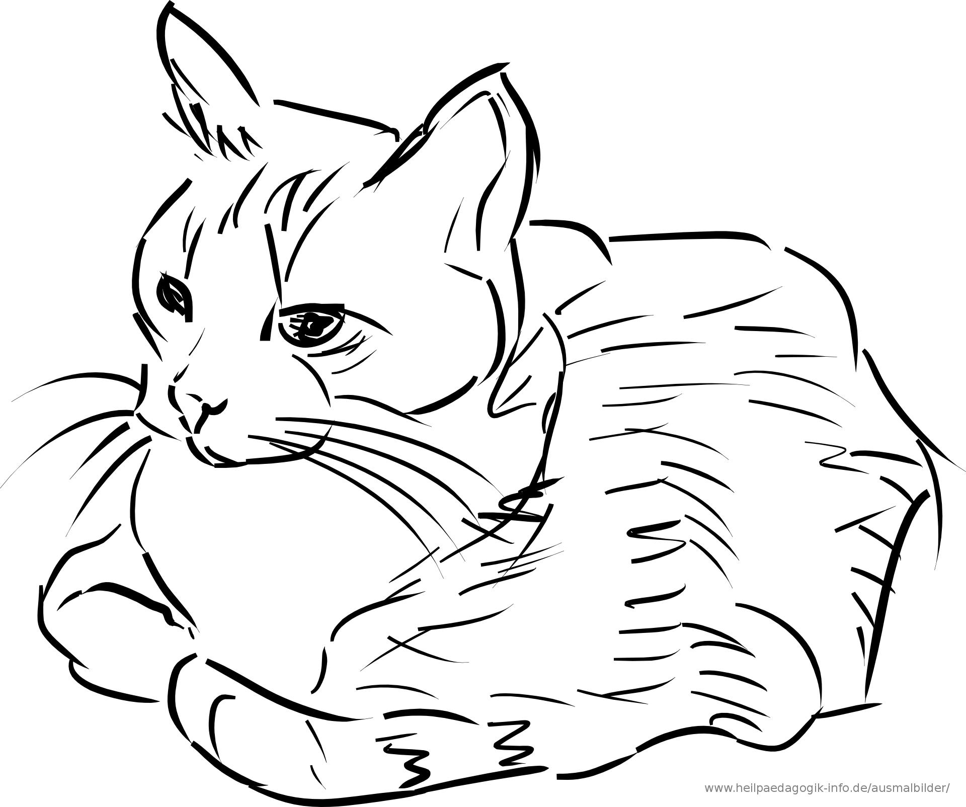 kätzchen ausmalbild 8  Ausmalbilder katzen, Ausmalbilder, Ausmalen