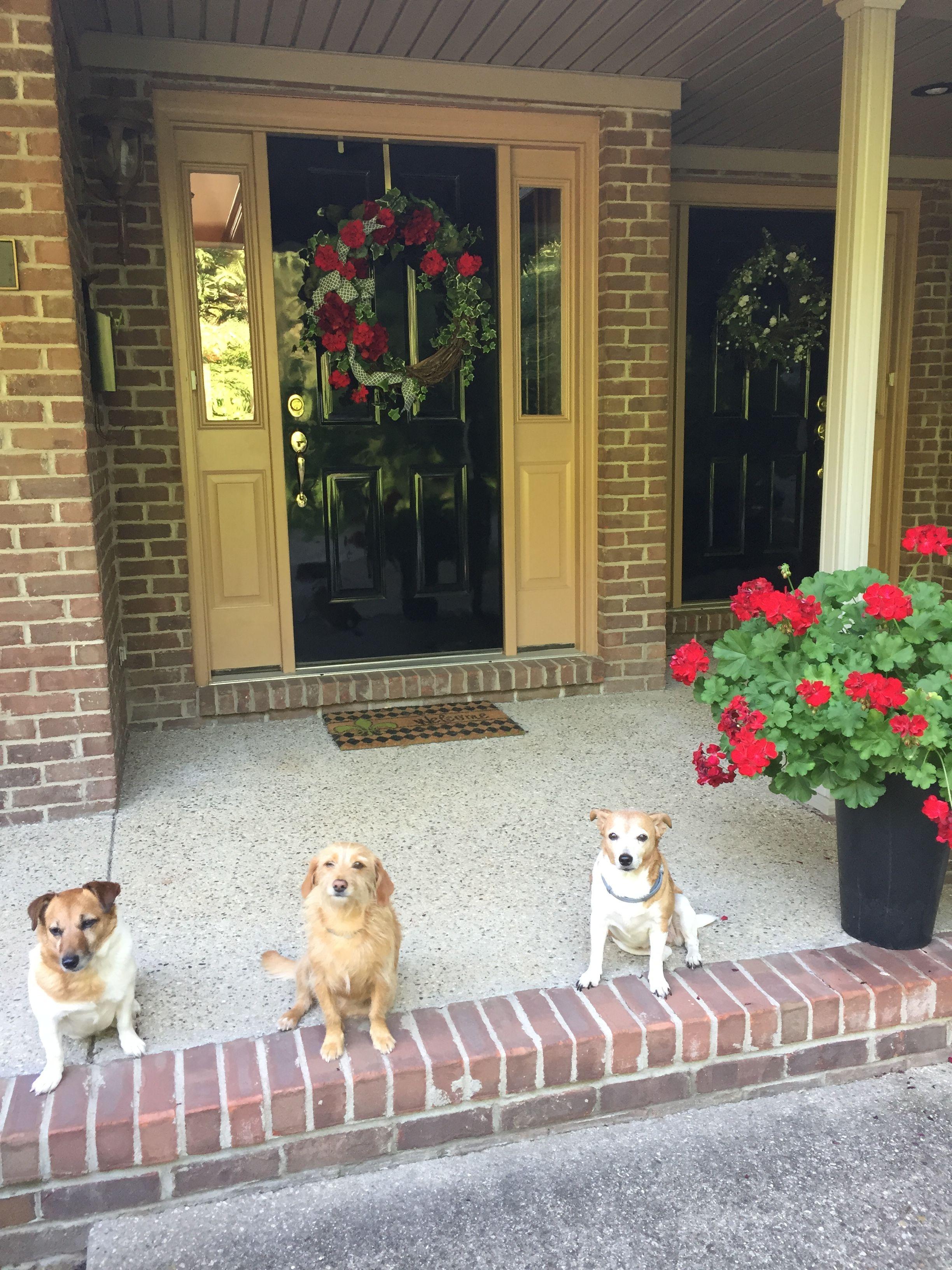 Idea by Lynn Pennington on Puppy Love Puppies, Puppy