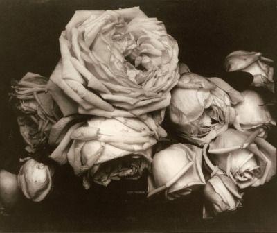 Xushima Edward Steichen Heavy Roses 1914 Edward Steichen History Of Photography Still Life Photography