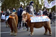 """Hollande's Tax Rebels Underscore """"Mounting"""" Opposition.(November 20th 2013)"""