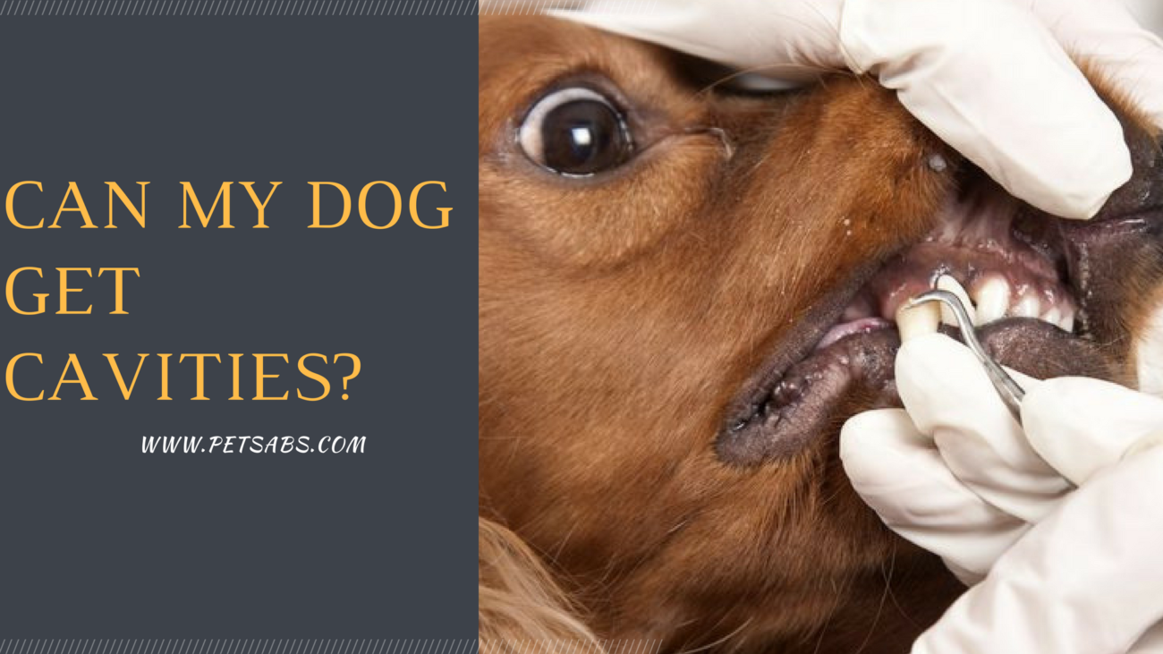 Pictures Of Cavities In Dogs