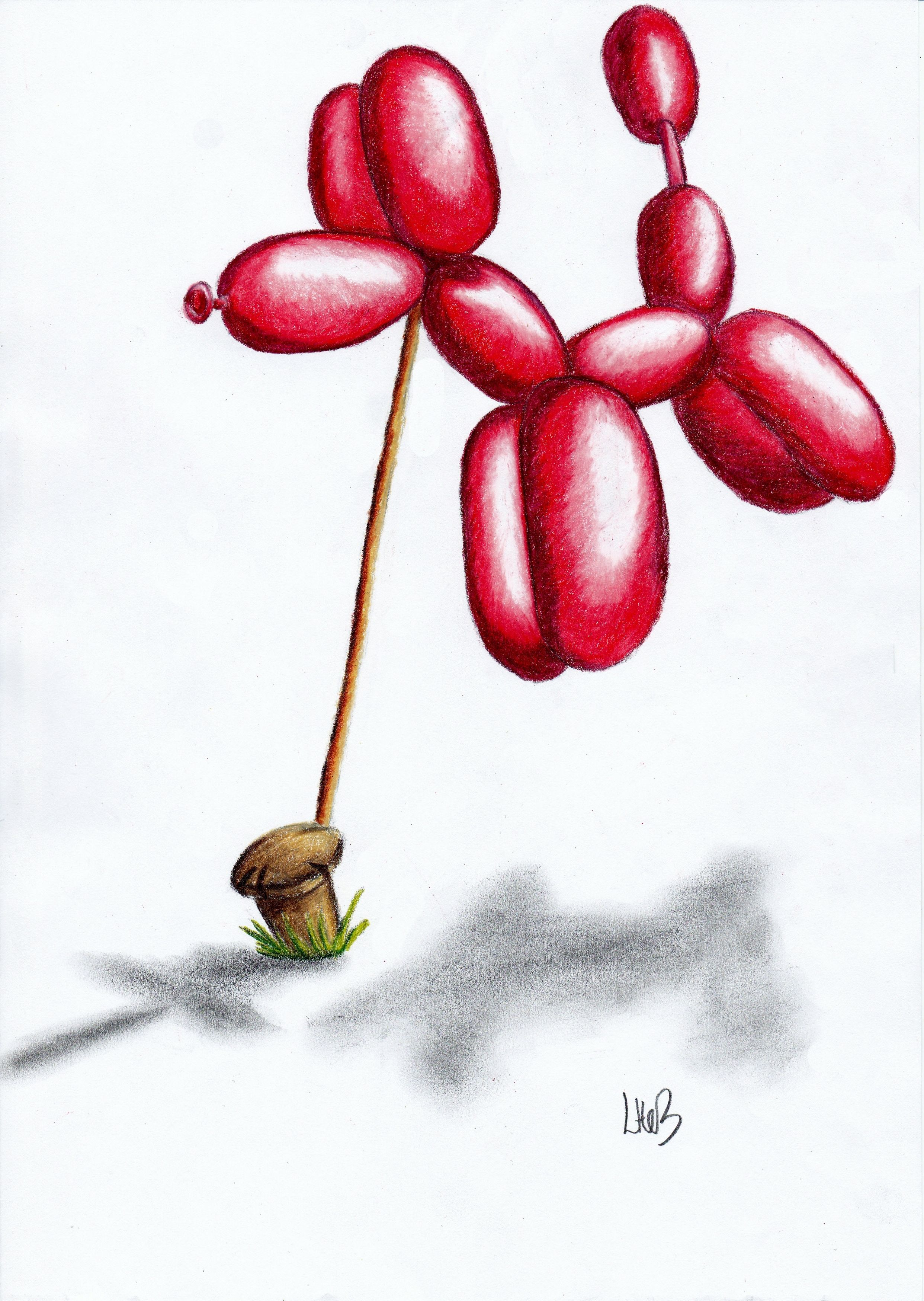 Balloon dog colour pencil drawing on copy paper watch the step by