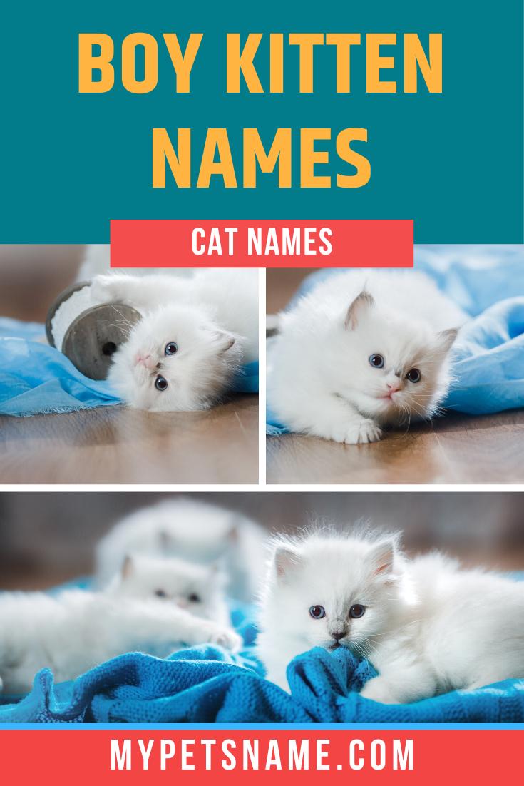 Boy Kitten Names In 2020 Kitten Names Kitten Male Pet Names