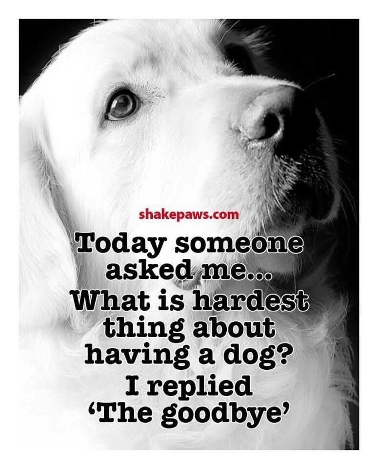 Dog Quotes Pets Pinterest Dogs Dog Quotes And Pets Simple Dog Loss Quotes