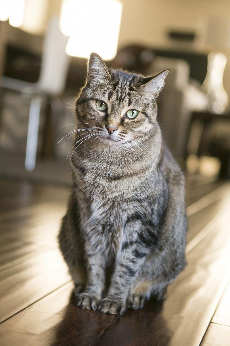 Cats In The Cradle Lyrics Cat Photography Tabby Cat Cat Care