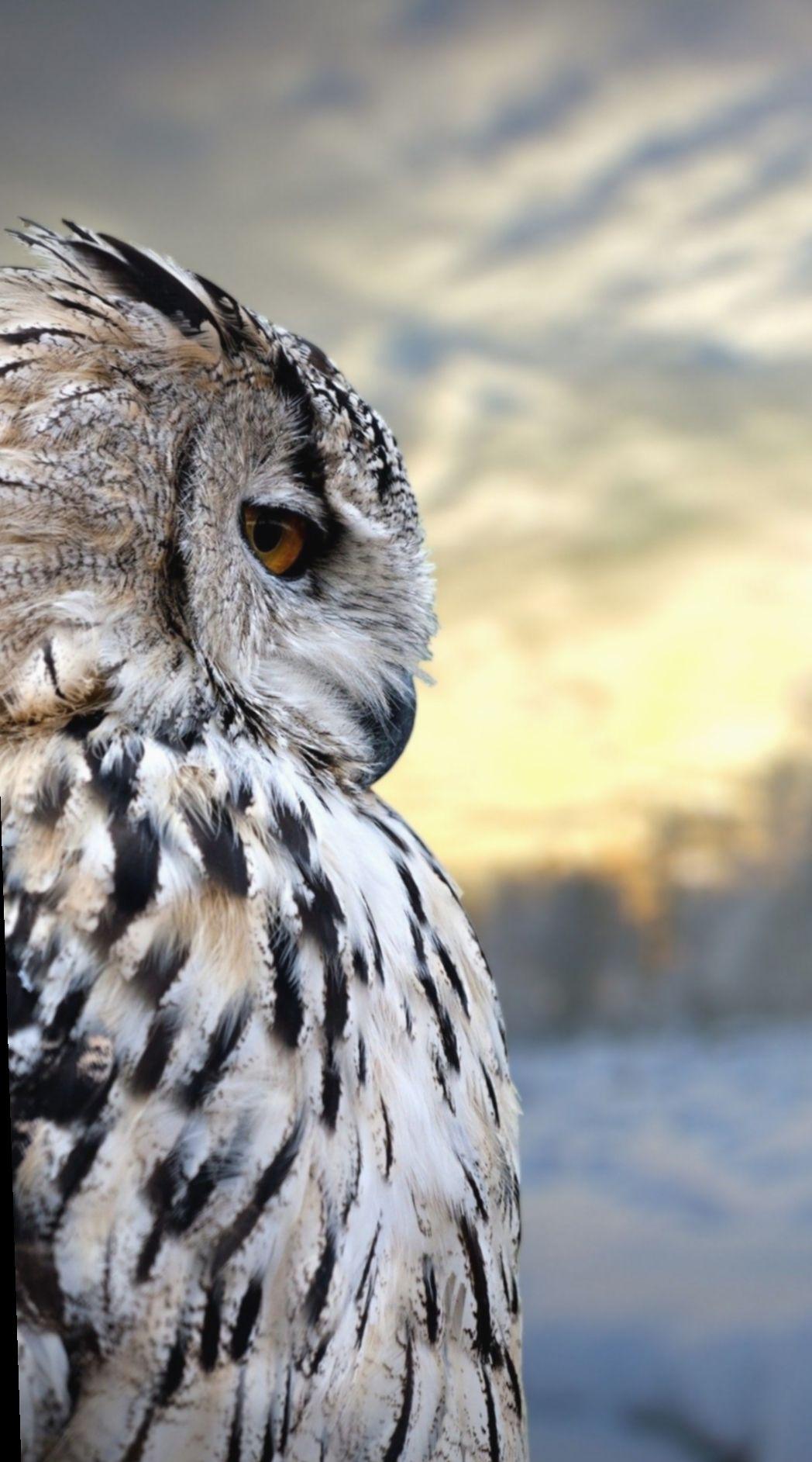 Cute Animals Wallpapers Laptop Aderitacristina Miniensaio Miniensaiodiadascriancas In 2020 Owl Wallpaper Owl Owl Pictures
