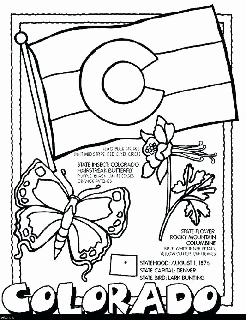 Pennsylvania State Bird Coloring Page Luxury Pennsylvania State Tree Coloring Page Turnkeyprint Flag Coloring Pages Bird Coloring Pages Social Studies