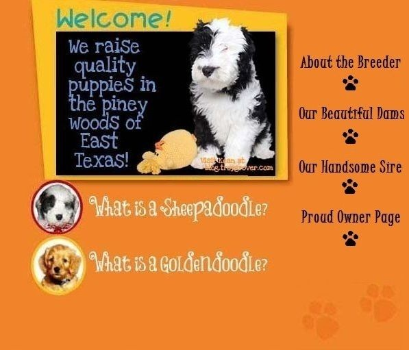 We Offer Miniature Goldendoodles Sheepadoodles Schnoodles And