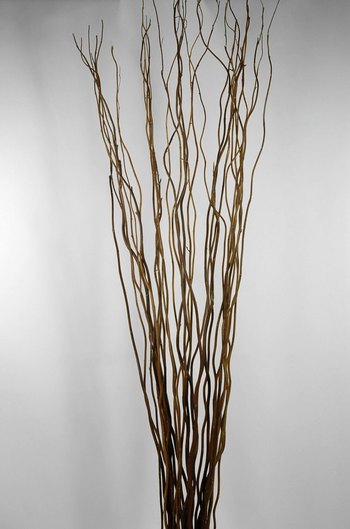 Natural Curly Willow Branches 26-30in 11 branches | Willow branches ...
