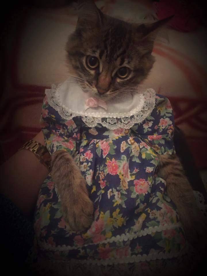 Want me to wear a dress? okay • /r/aww Animals