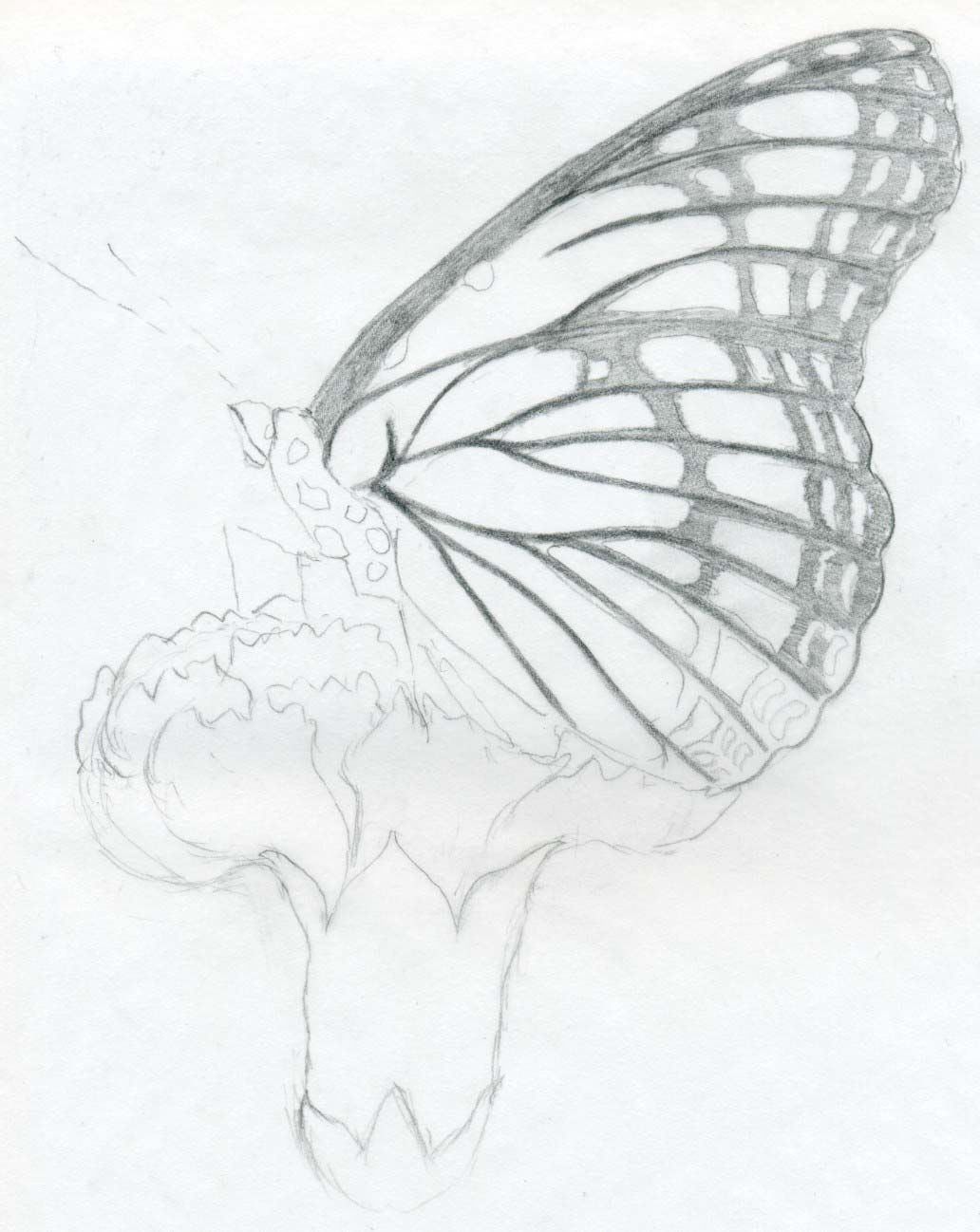 Butterfly Pencil Drawings You Can Practice Pencil Drawings Easy