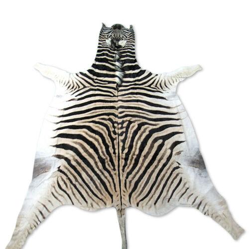 Real Zebra Skin Rug Size 8 X 6 Brand New Burchell S Zebra Hide Zebra Rug 59 Zebra Skin Rug Zebra Hide Rug Skin Rugs