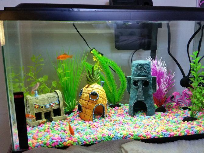 Cool Goldfish Tank Quot Today There Are Four Goldfish In Bags On Our Countertop They Look Unhappy