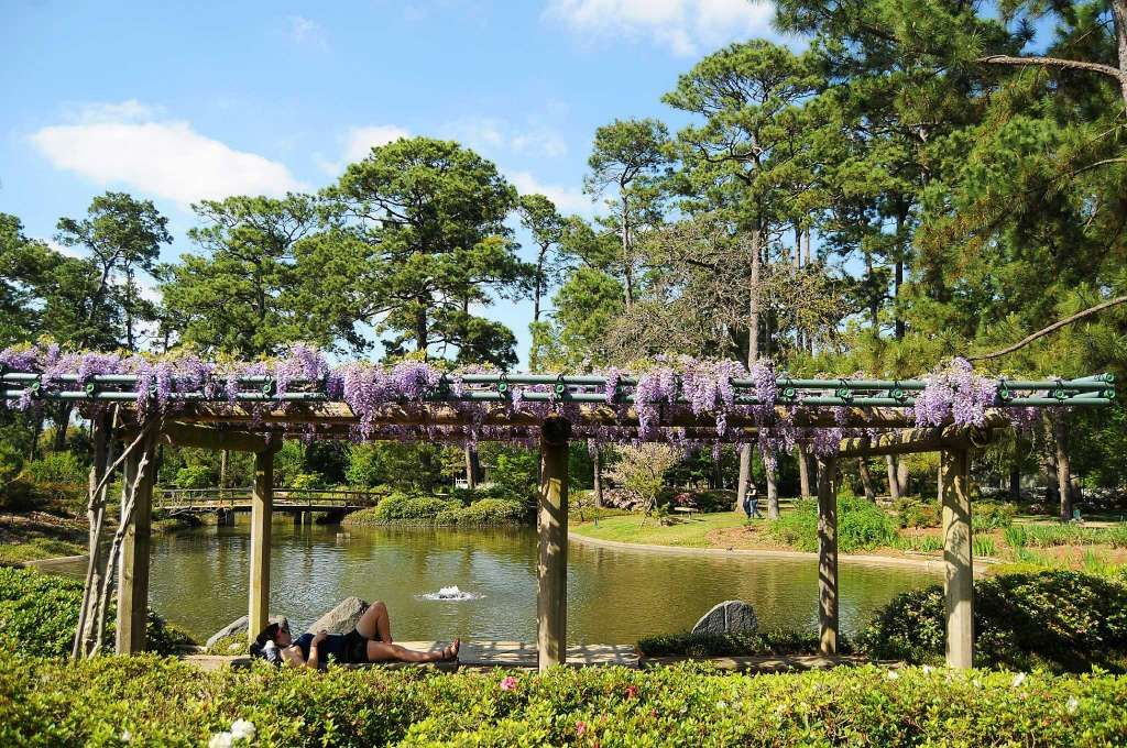 Purple Wisteria Covers The Shady Trellis Where Many Visitors Enjoy The  Scenery Of The Japanese Garden In Hermann Park. (Dave Rossman Photo) Photo:  Dave ...