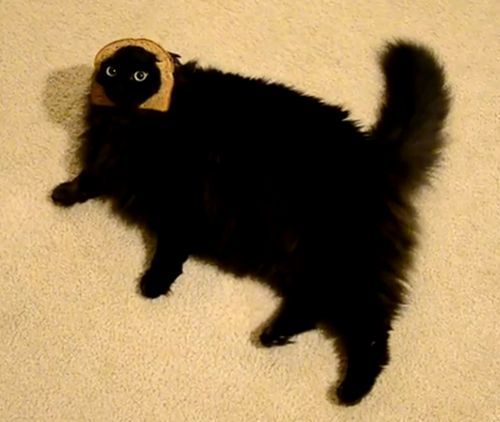 a fat black cat lying on its side on the floor while wearing the crust of a slice of bread around its face