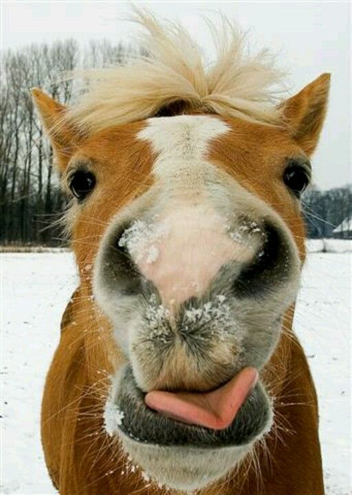 :) BitBalm makes great stocking stuffers.  10 Flavours your horse loves
