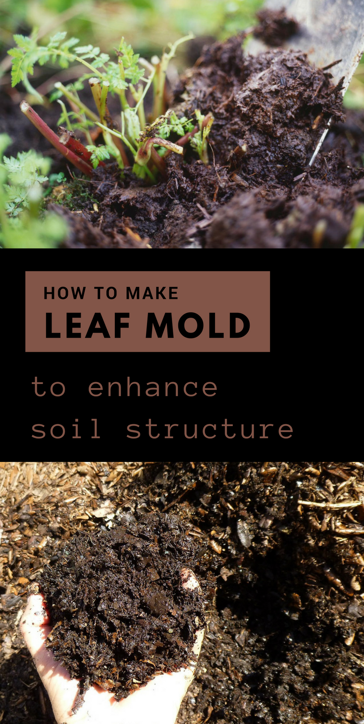 How To Make Leaf Mold To Enhance Soil Structure Garden Soil How