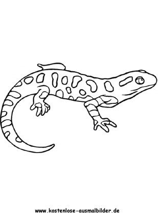 salamander ausmalbild | ausmalen, drachen zum ausmalen, ausmalbilder