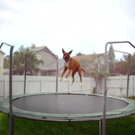 Animals Jumping On Trampolines Video Karen Wild On 106 1 Kiss