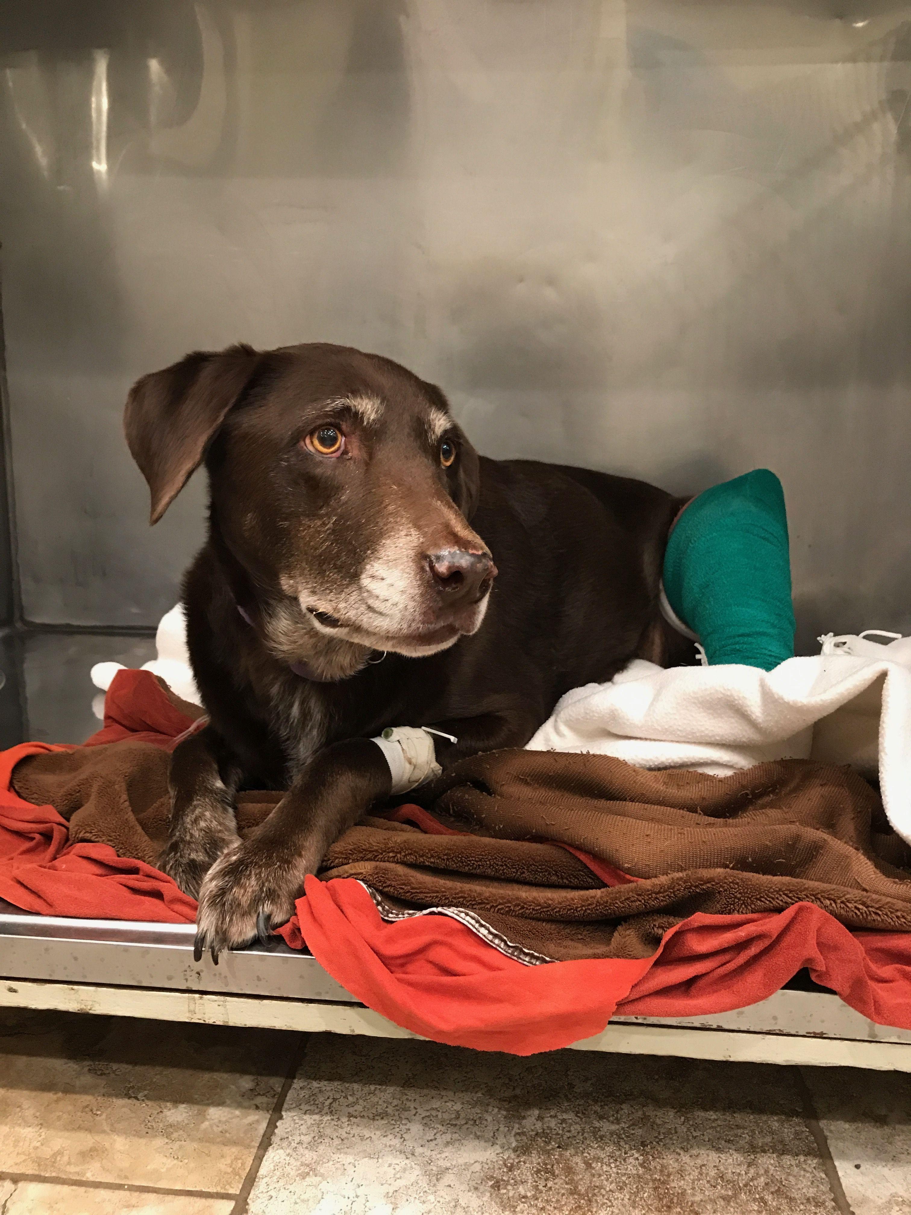 Sierra, Orthopedic Case Animal hospital, Your pet, Animals