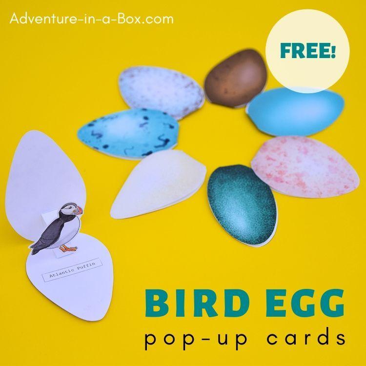 Bird Egg Cards With Templates In 2021 Egg Card Bird Eggs Bird Template