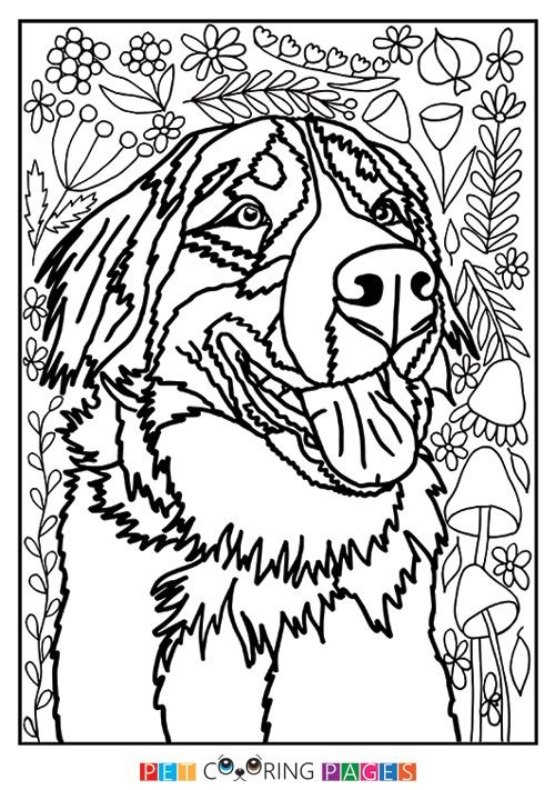 Bernese Mountain Dog Coloring Page Bernadette Dog Coloring