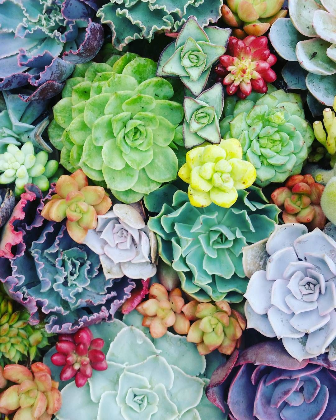 Instagram photo by lost_coast_succulents Succulents