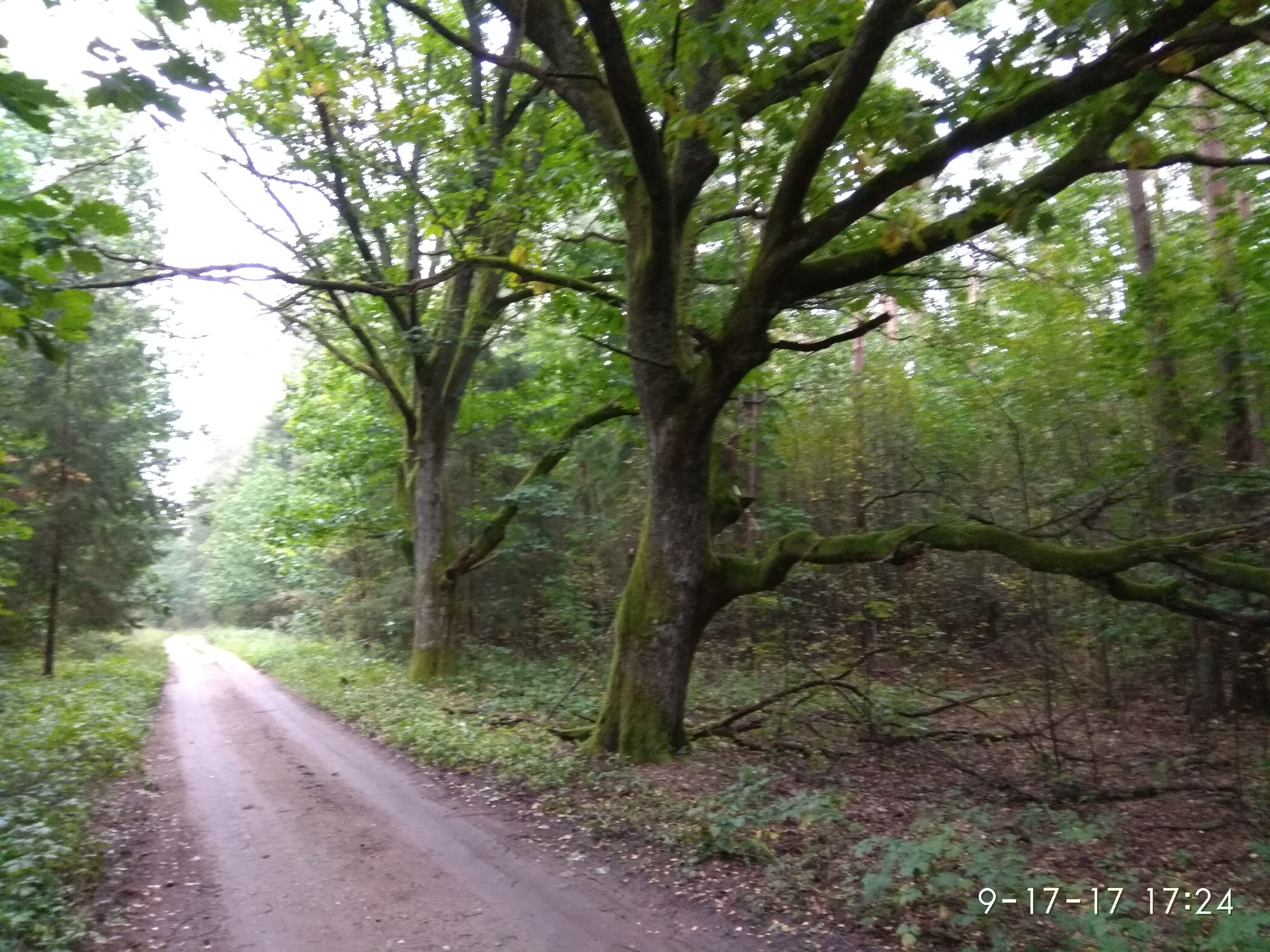 Pin by jotka on Foto užrašai Country roads, Country